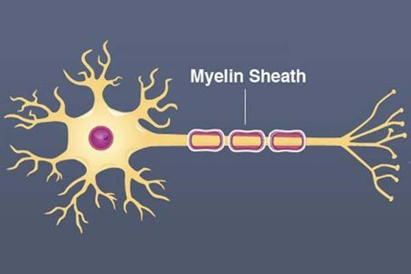 FLOW-en-de-rol-van-het-autonome-zenuwstelsel